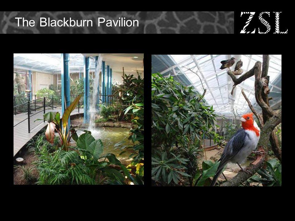 The Blackburn Pavilion