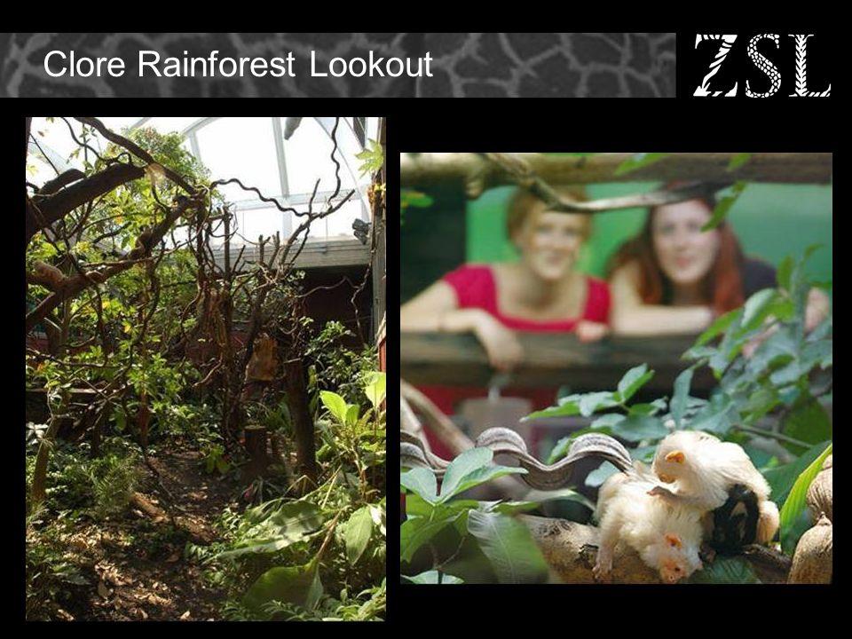 Clore Rainforest Lookout