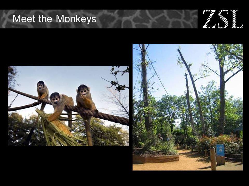 Meet the Monkeys