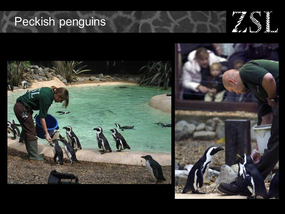 Peckish penguins