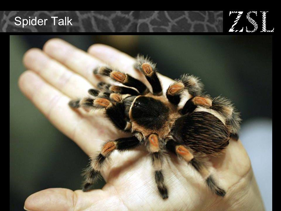 Spider Talk