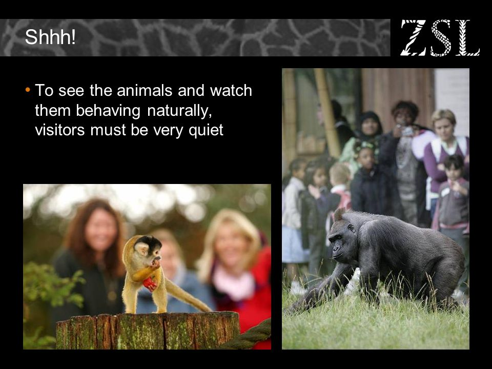 Shhh! To see the animals and watch them behaving naturally, visitors must be very quiet