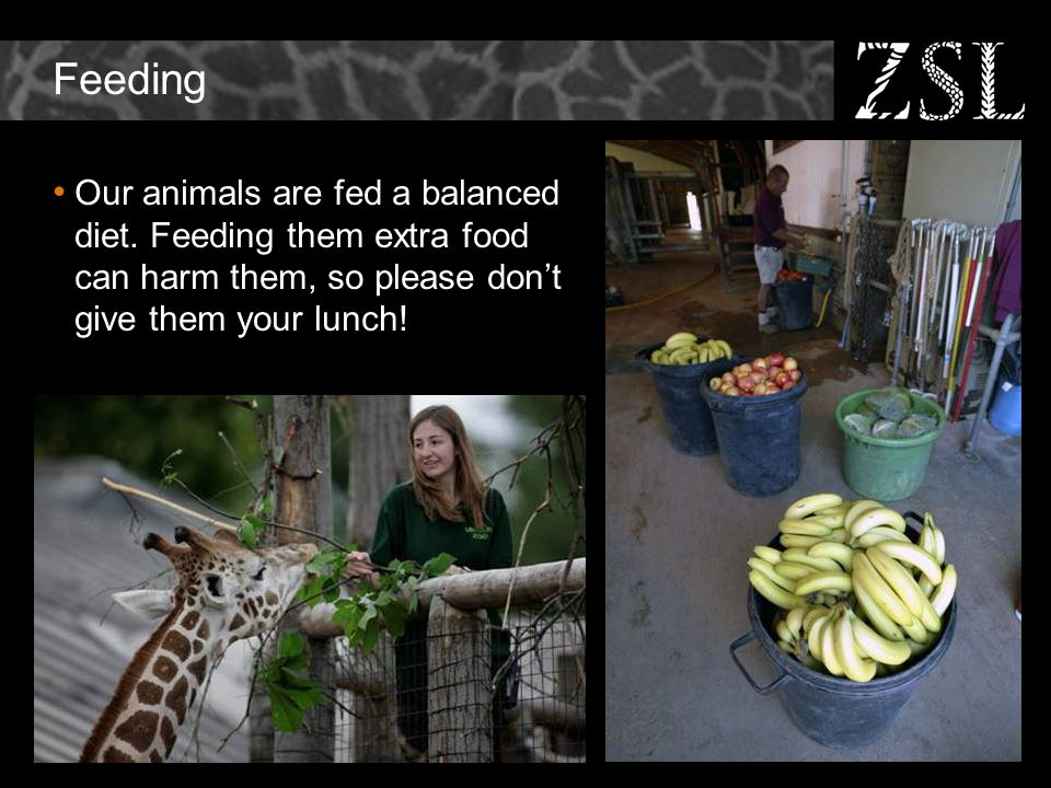 Feeding Our animals are fed a balanced diet.