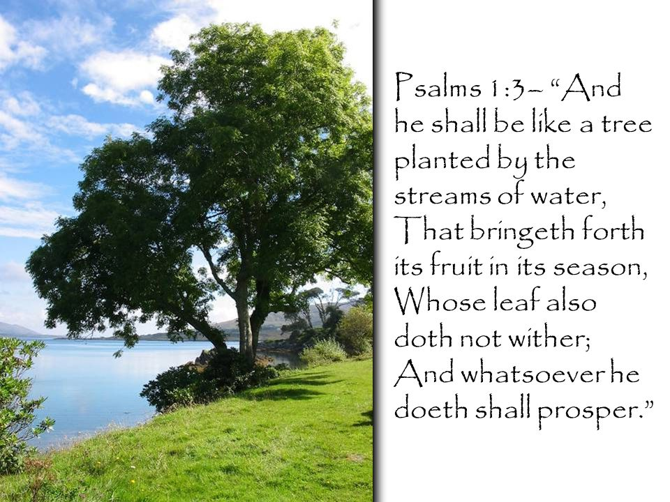Psalms 1:3– And he shall be like a tree planted by the streams of water, That bringeth forth its fruit in its season, Whose leaf also doth not wither; And whatsoever he doeth shall prosper.