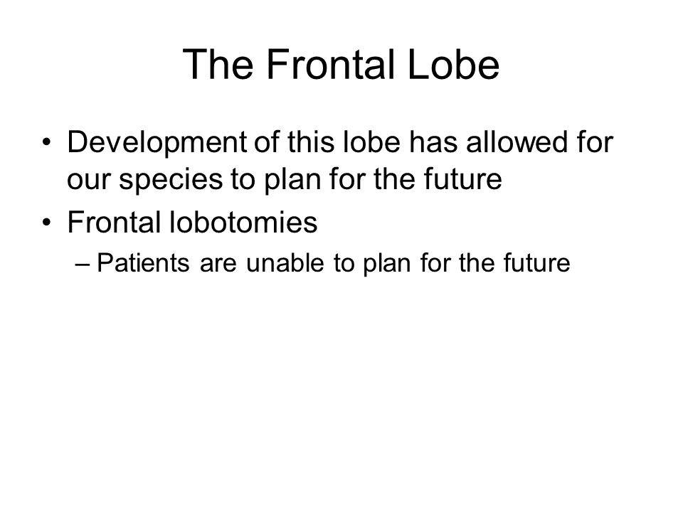 The Frontal Lobe Development of this lobe has allowed for our species to plan for the future Frontal lobotomies –Patients are unable to plan for the future