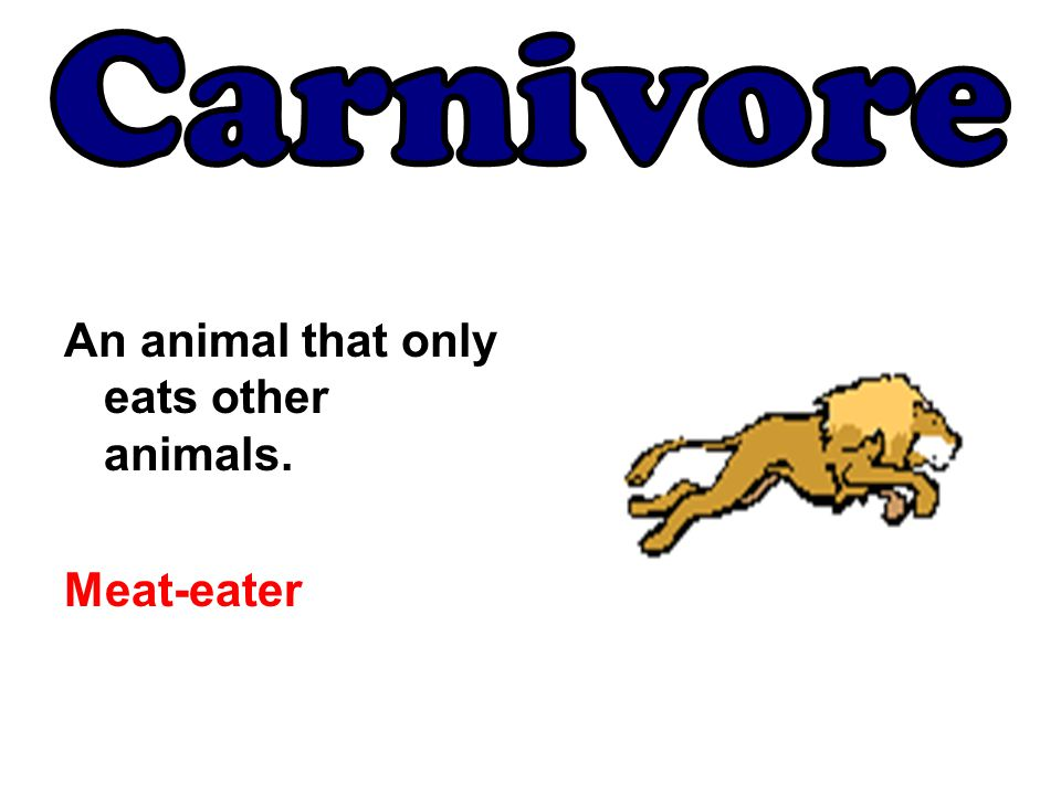 An animal that only eats other animals. Meat-eater