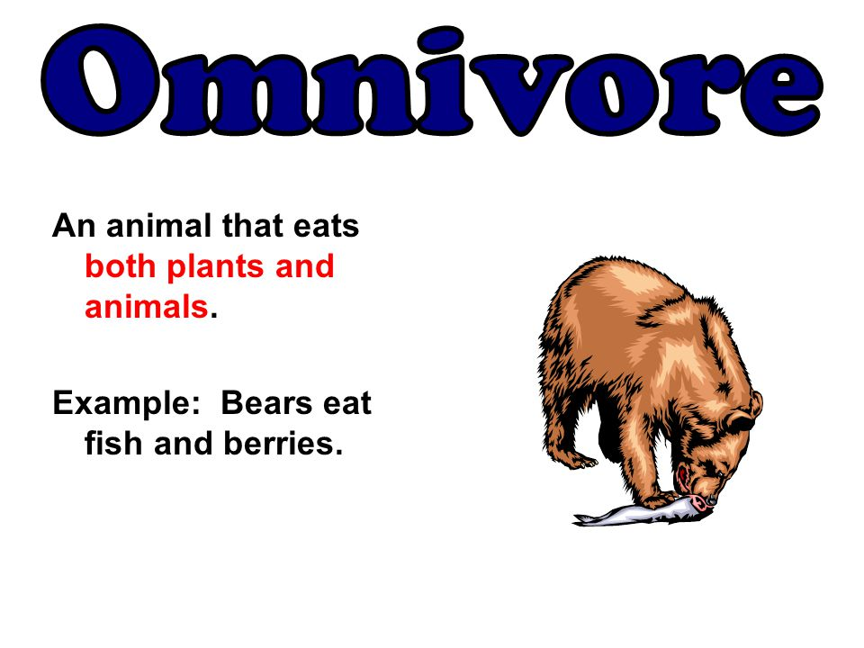An animal that eats both plants and animals. Example: Bears eat fish and berries.