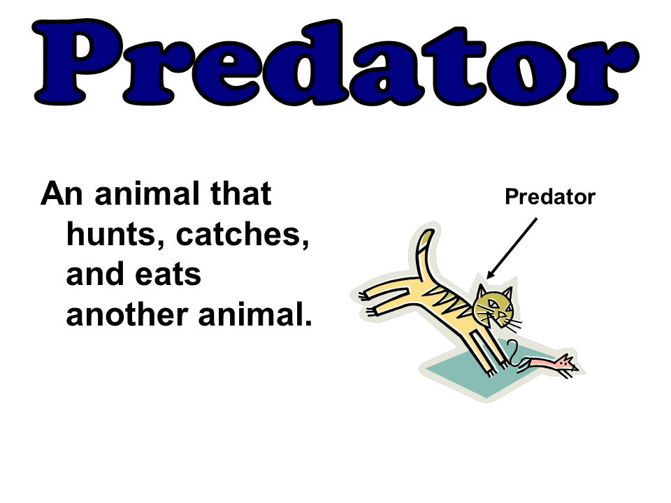 An animal that hunts, catches, and eats another animal. Predator