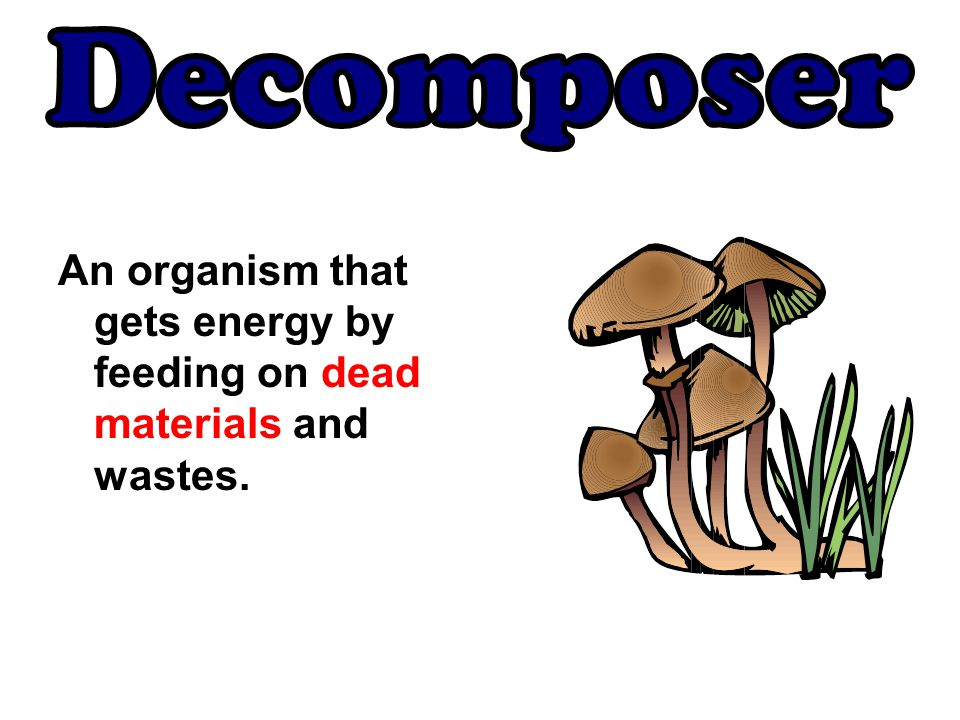An organism that gets energy by feeding on dead materials and wastes.