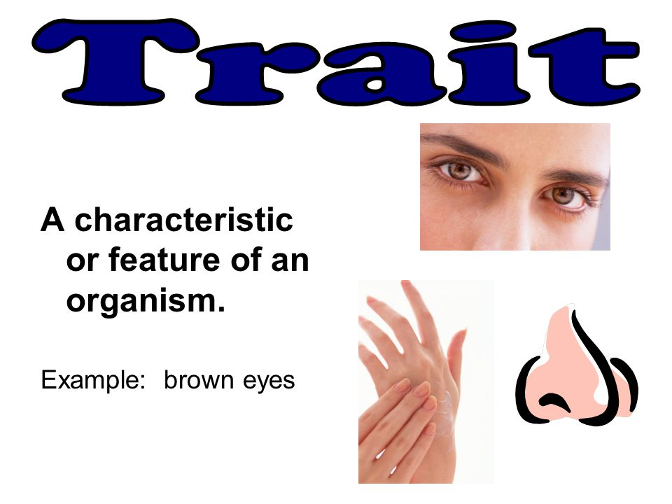 A characteristic or feature of an organism. Example: brown eyes