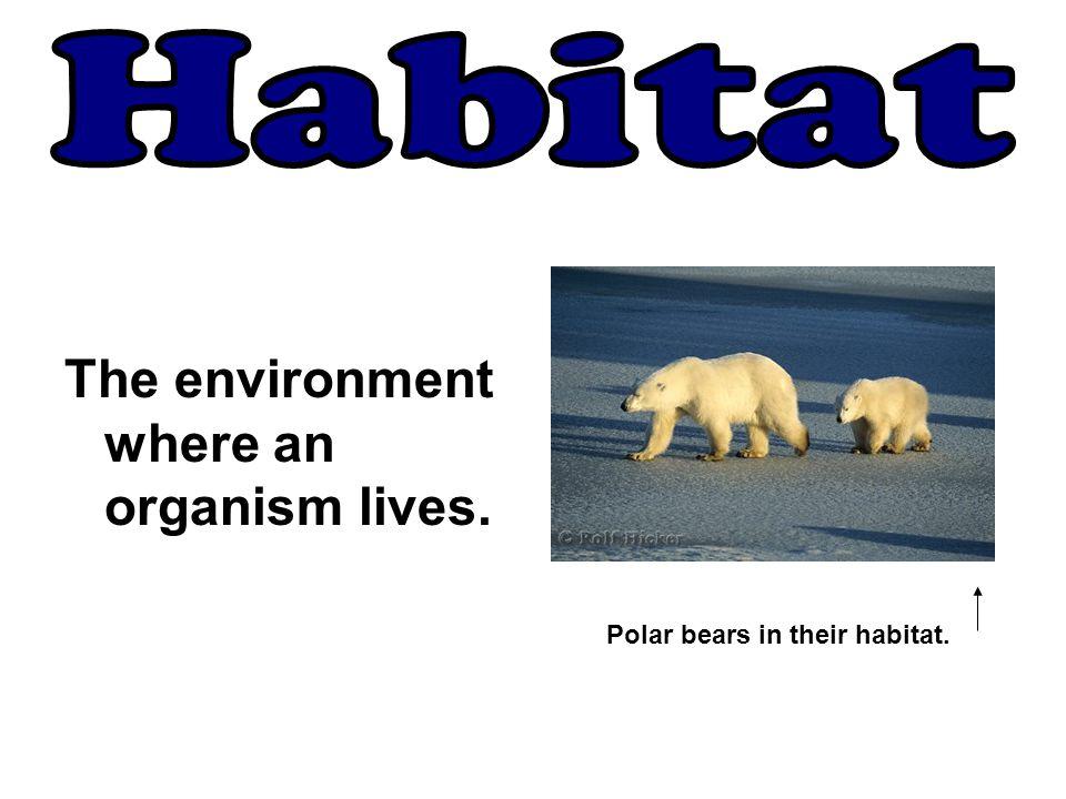 The environment where an organism lives. Polar bears in their habitat.