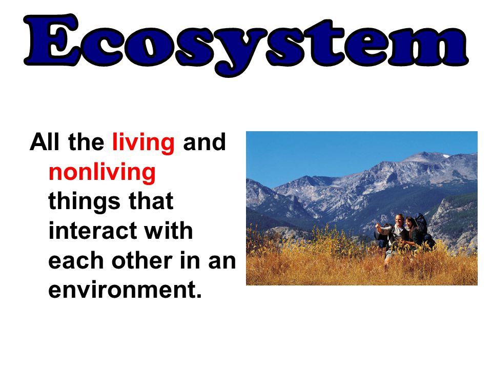 All the living and nonliving things that interact with each other in an environment.