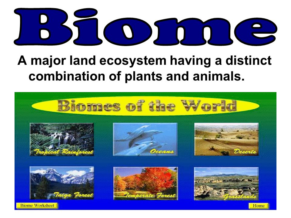 A major land ecosystem having a distinct combination of plants and animals.