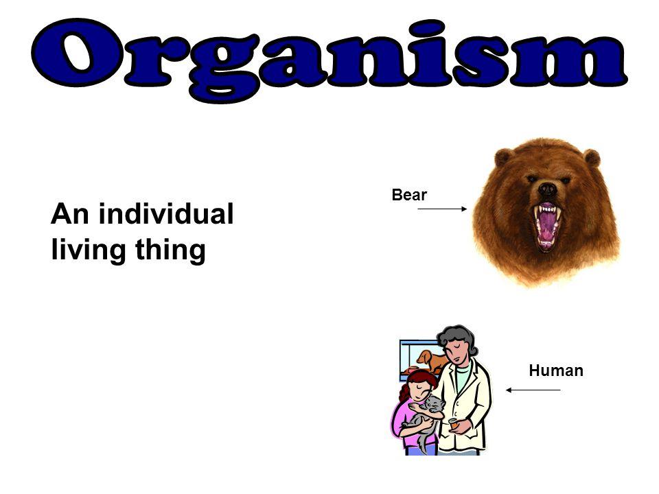 Bear Human An individual living thing