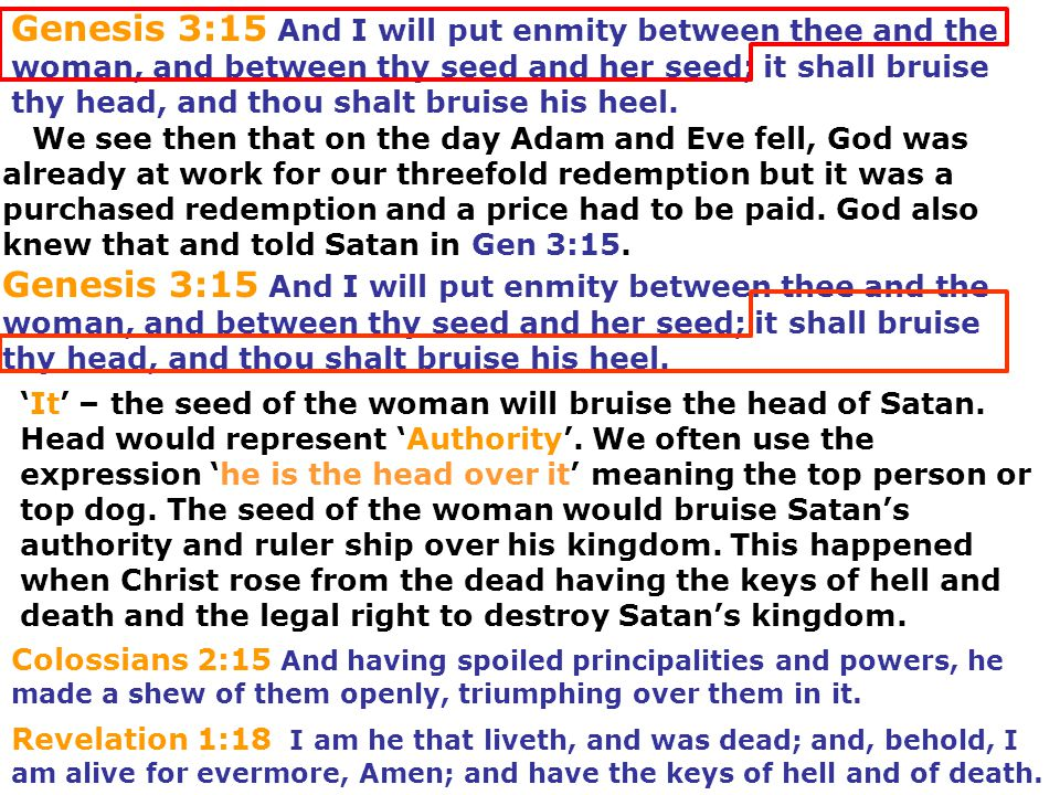 Genesis 3:15 And I will put enmity between thee and the woman, and between thy seed and her seed; it shall bruise thy head, and thou shalt bruise his