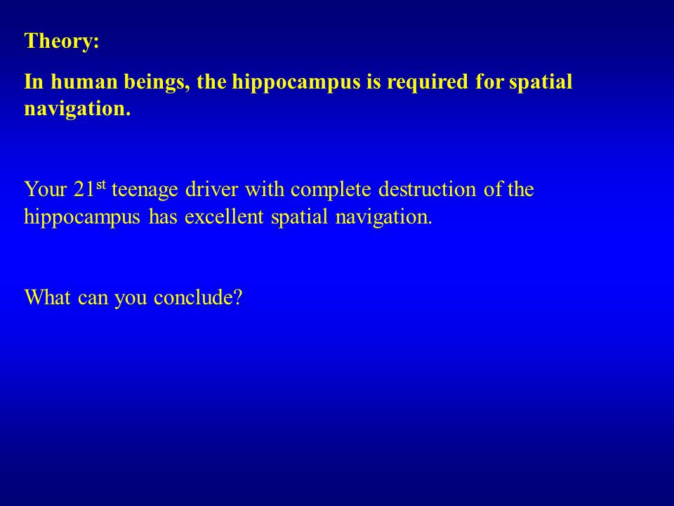 Theory: In human beings, the hippocampus is required for spatial navigation.