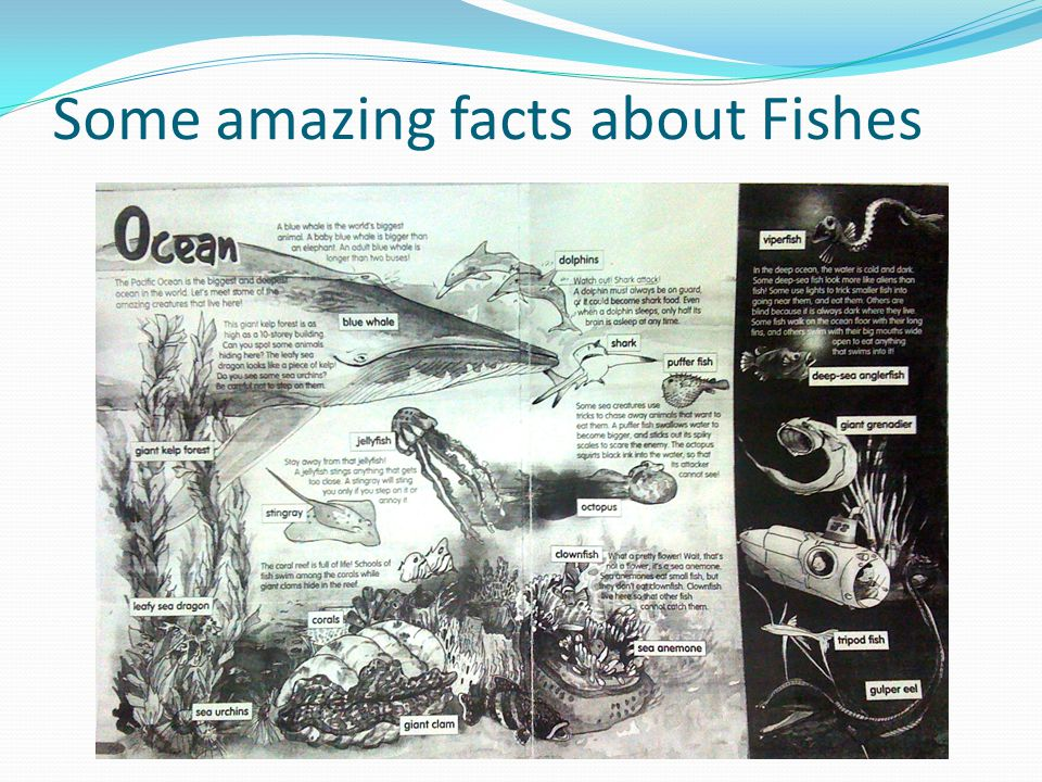 Some amazing facts about Fishes