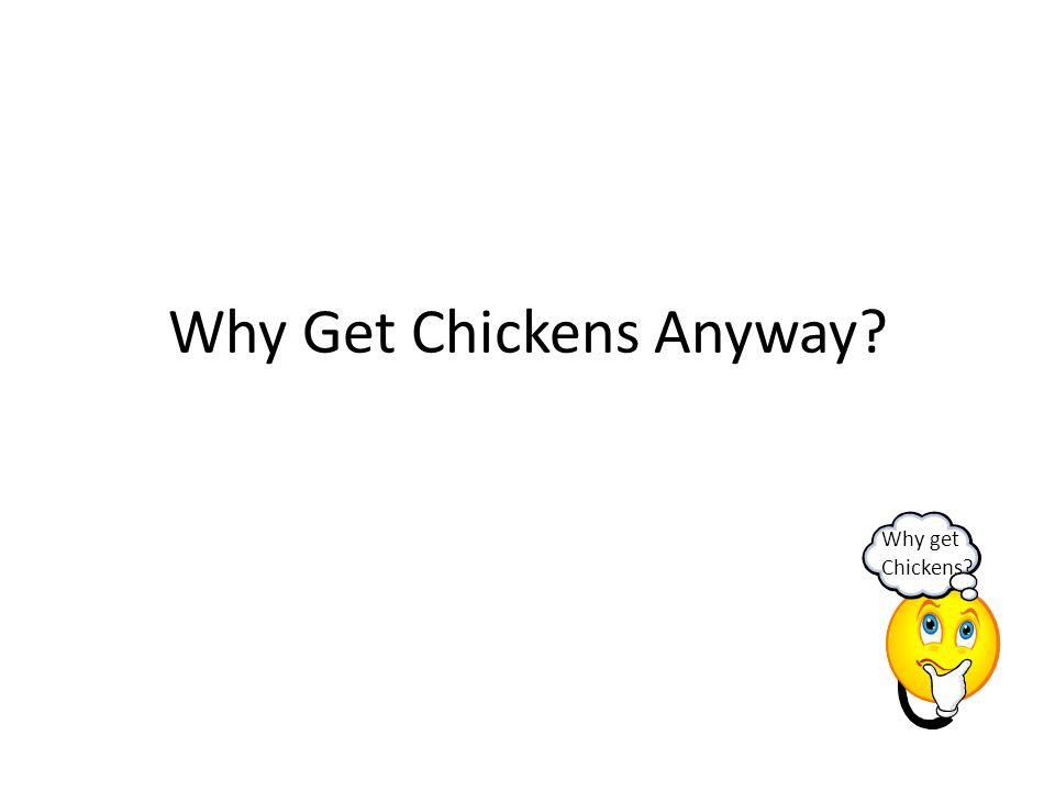 The Basics Chickens need care every day, but some work can be done once a week, month, or twice a year.