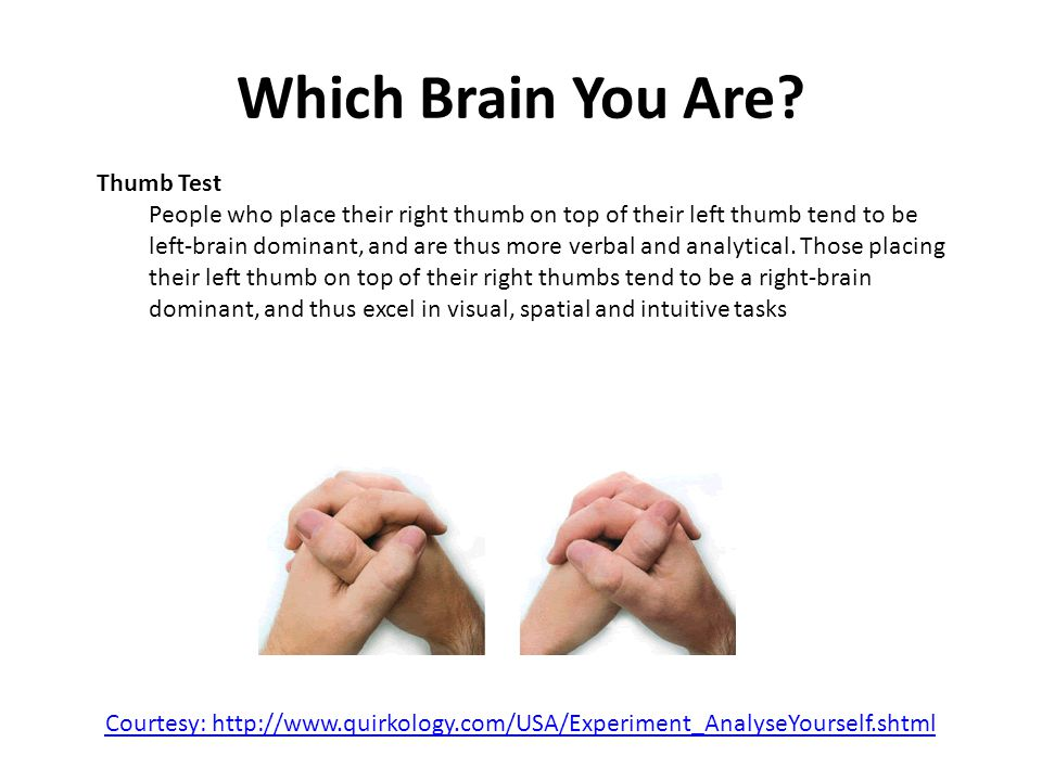 Which Brain You Are.