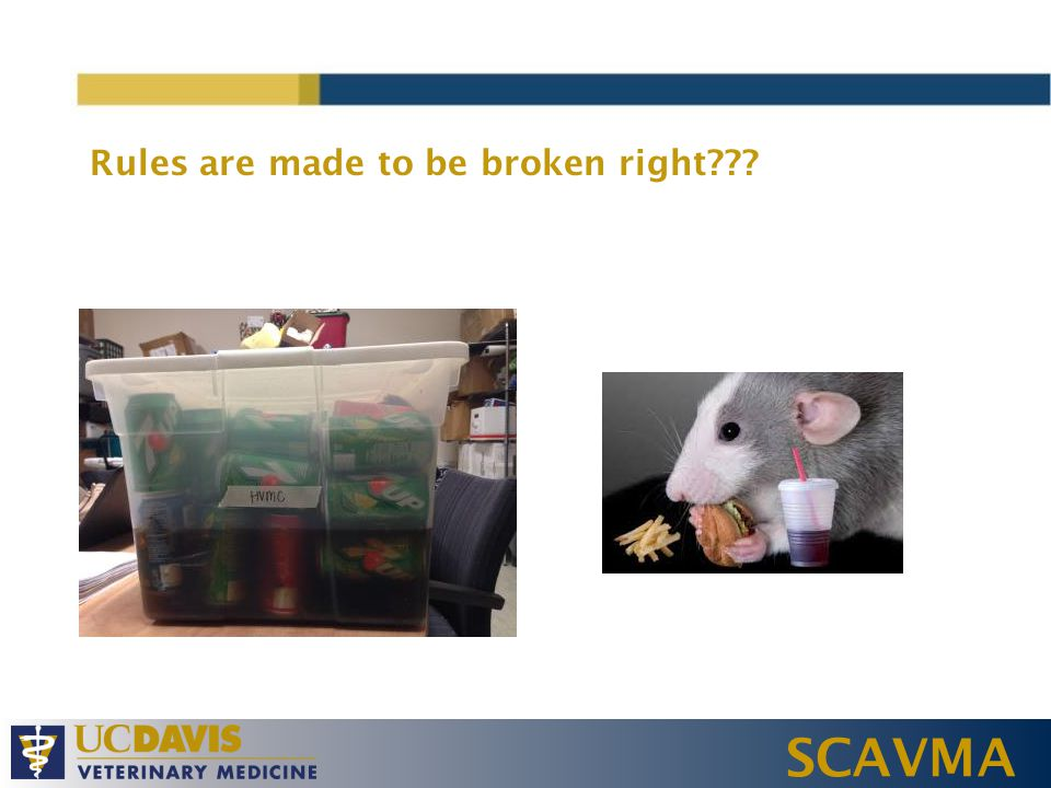 SCAVMA Rules are made to be broken right