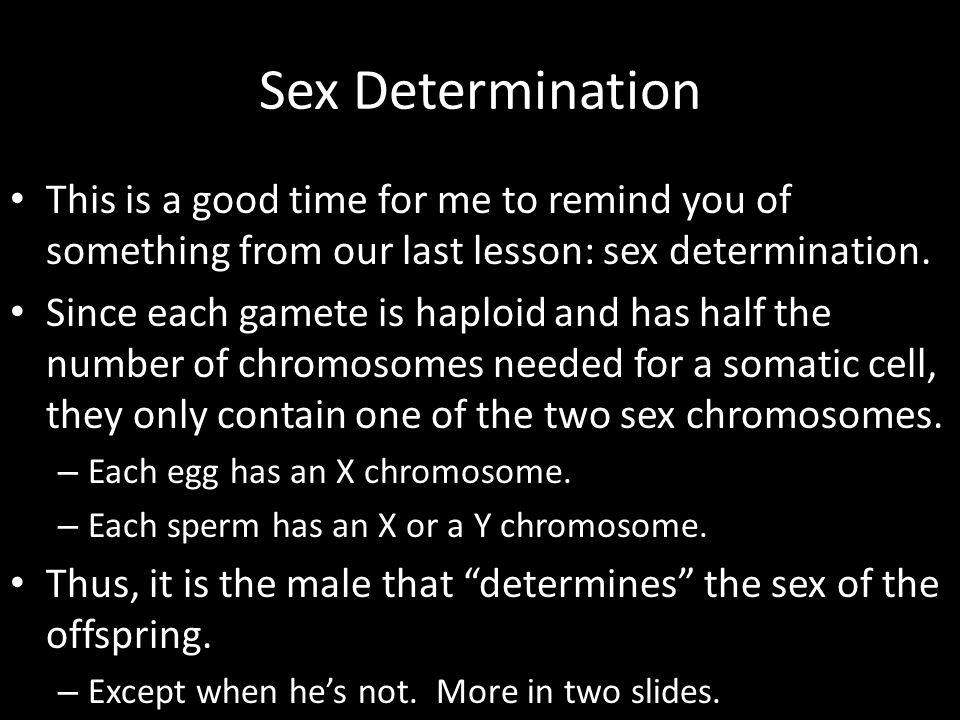 Sex Determination This is a good time for me to remind you of something from our last lesson: sex determination. Since each gamete is haploid and has