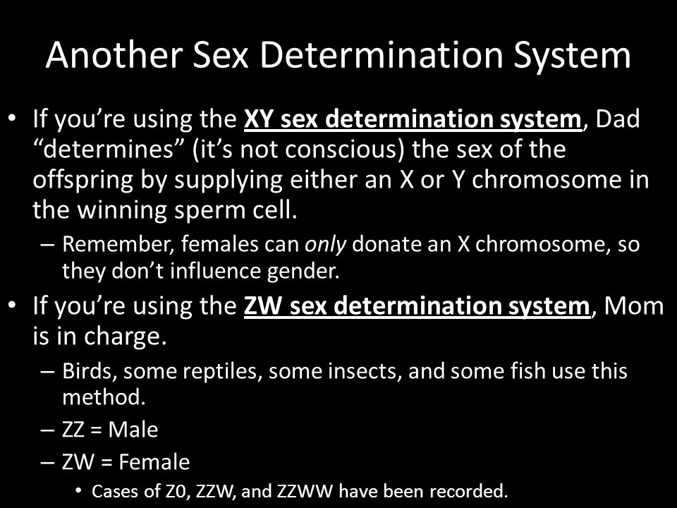 "Another Sex Determination System If you're using the XY sex determination system, Dad ""determines"" (it's not conscious) the sex of the offspring by su"