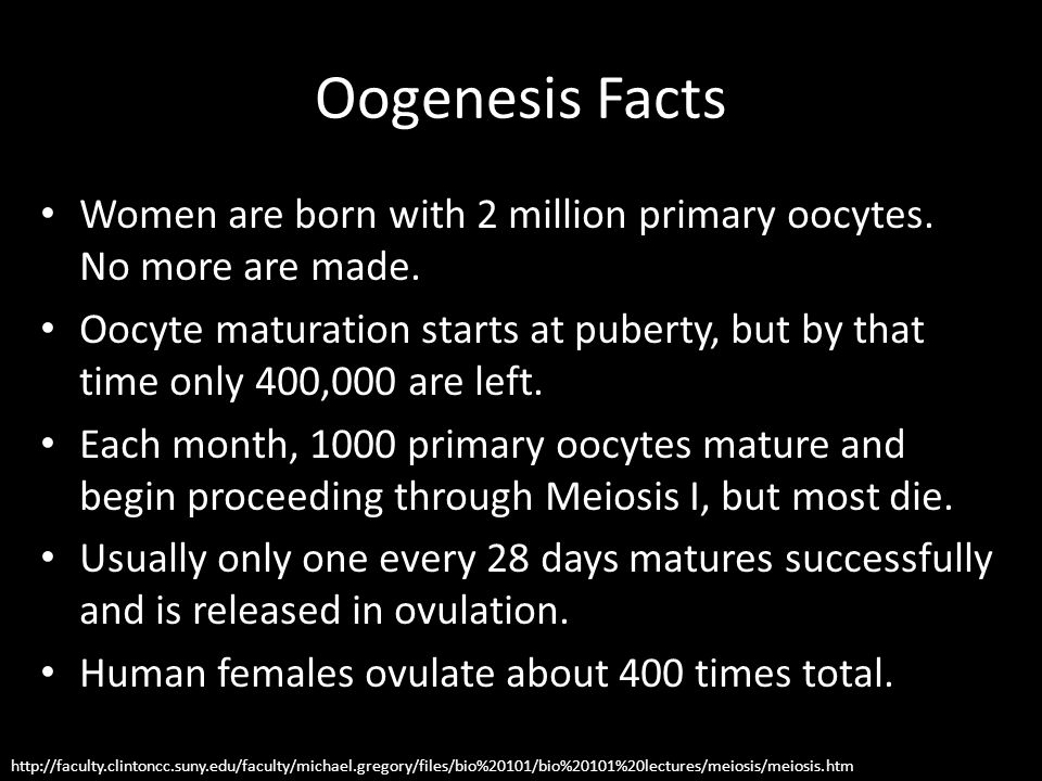 Oogenesis Facts Women are born with 2 million primary oocytes. No more are made. Oocyte maturation starts at puberty, but by that time only 400,000 ar