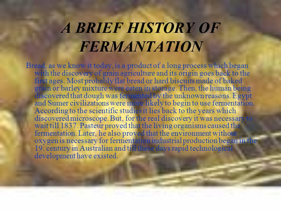 A BRIEF HISTORY OF FERMANTATION Bread, as we know it today, is a product of a long process which began with the discovery of grain agriculture and its origin goes back to the first ages.
