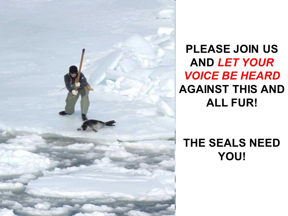 Join us on Edinburgh Drive Wynberg at 08h30 Sunday 14 th March 2010 during the Argus Cycle Tour, and let those thousands of cyclists know about the horrors of fur and the seal hunt.