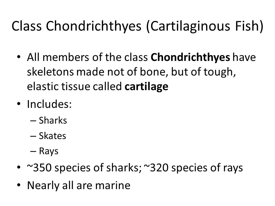 Class Chondrichthyes (Cartilaginous Fish) All members of the class Chondrichthyes have skeletons made not of bone, but of tough, elastic tissue called