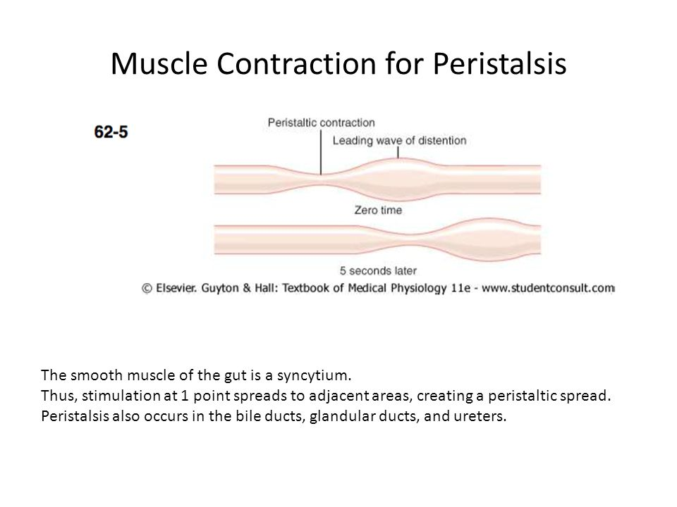 Muscle Contraction for Peristalsis The smooth muscle of the gut is a syncytium. Thus, stimulation at 1 point spreads to adjacent areas, creating a per