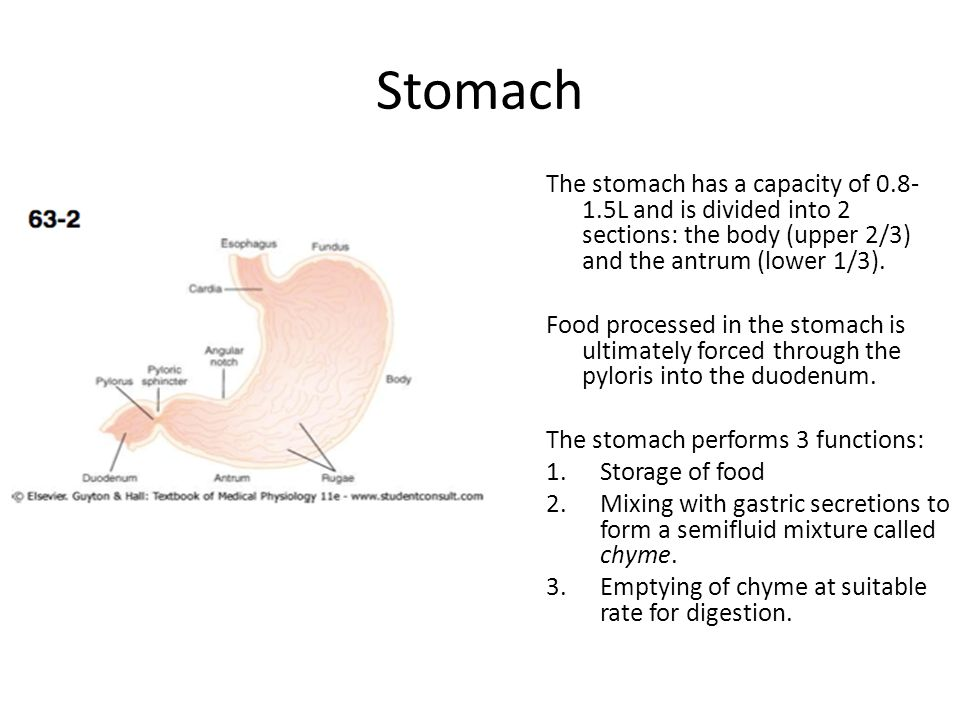 Stomach The stomach has a capacity of 0.8- 1.5L and is divided into 2 sections: the body (upper 2/3) and the antrum (lower 1/3). Food processed in the