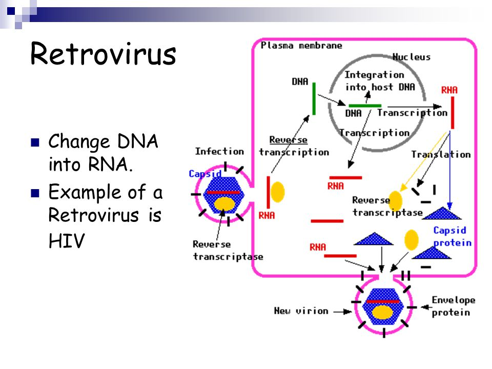 Retrovirus Change DNA into RNA. Example of a Retrovirus is HIV