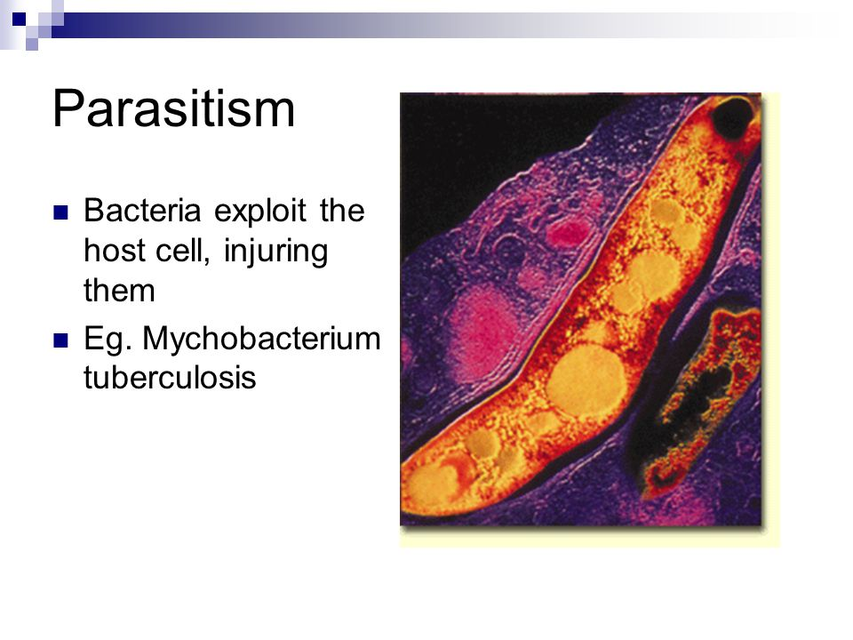 Parasitism Bacteria exploit the host cell, injuring them Eg. Mychobacterium tuberculosis
