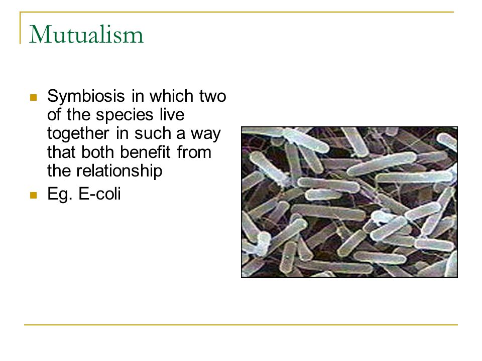 Mutualism Symbiosis in which two of the species live together in such a way that both benefit from the relationship Eg.