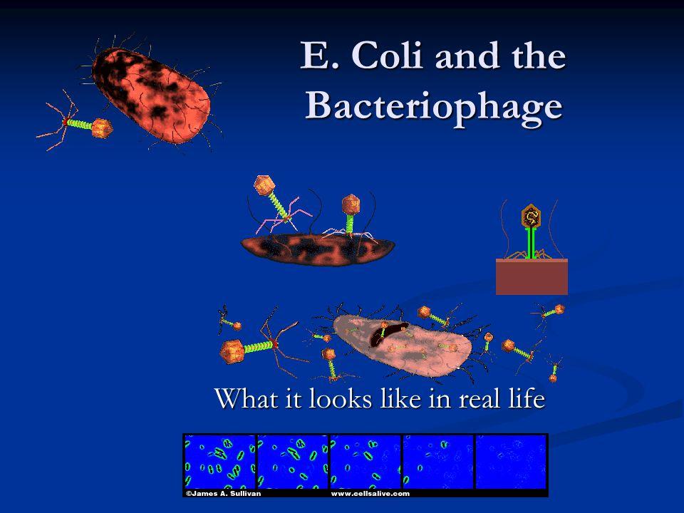 Chemotrophs Make own Energy Make own Energy Using Chemical energy Using Chemical energy Eg.