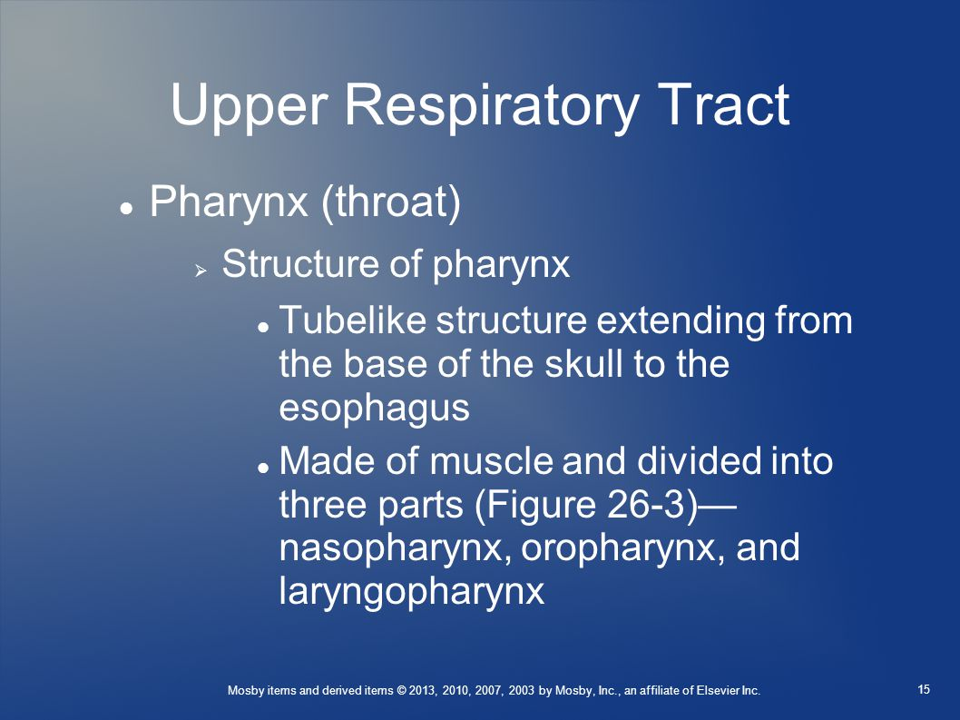 Mosby items and derived items © 2013, 2010, 2007, 2003 by Mosby, Inc., an affiliate of Elsevier Inc. Upper Respiratory Tract Pharynx (throat)  Struct