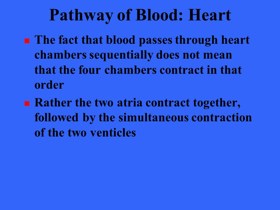 Pathway of Blood: Heart The fact that blood passes through heart chambers sequentially does not mean that the four chambers contract in that order Rat