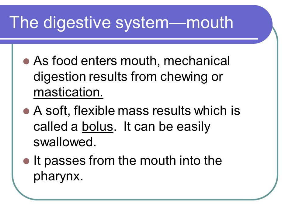The digestive system—mouth As food enters mouth, mechanical digestion results from chewing or mastication. A soft, flexible mass results which is call