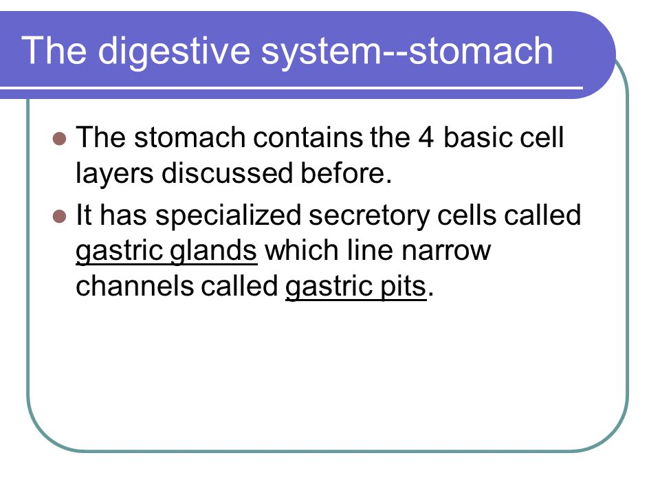 The digestive system--stomach The stomach contains the 4 basic cell layers discussed before. It has specialized secretory cells called gastric glands