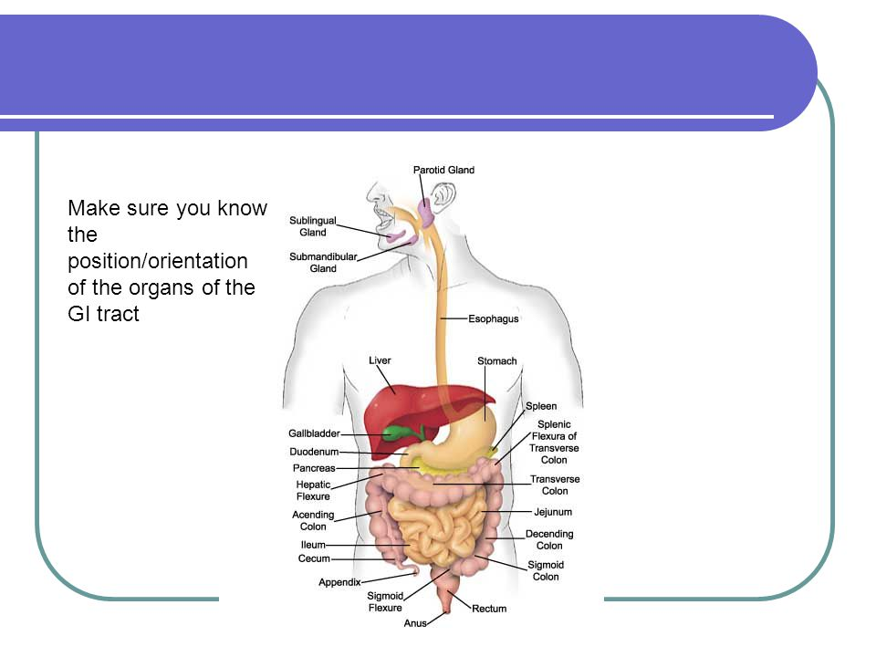 The digestive system--overview The food we eat contains lots of nutrients, but most of them are too large to be taken in by our cells.