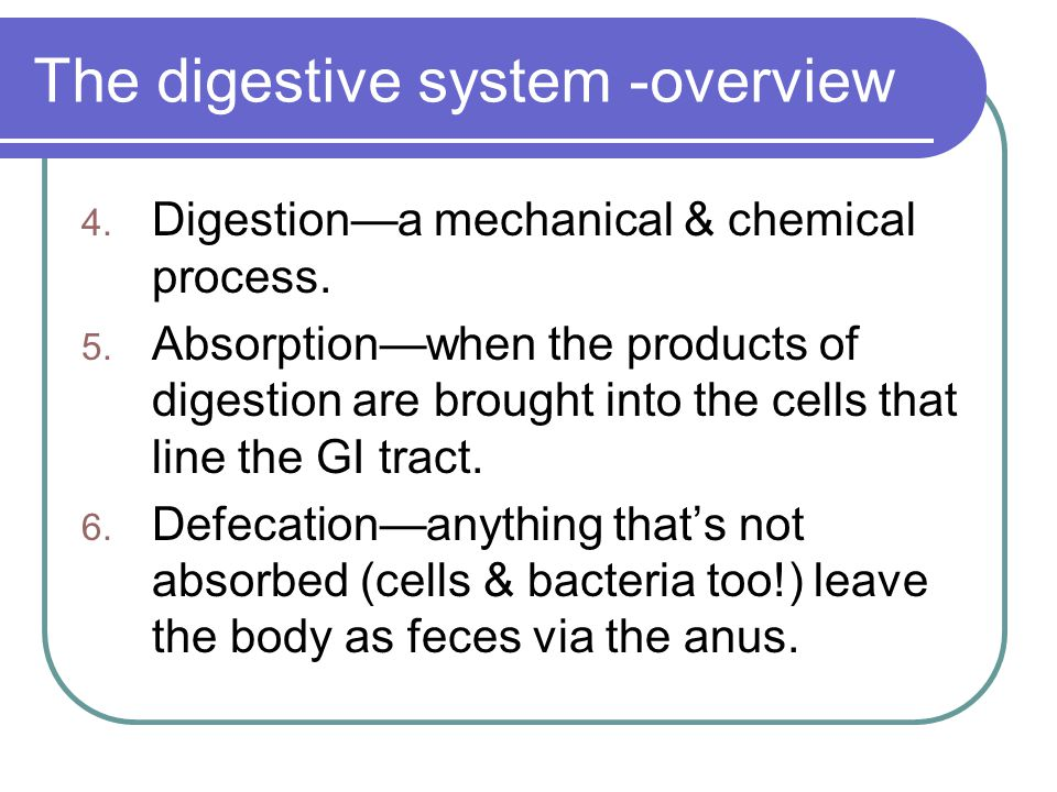 The digestive system -overview The digestive system is basically a tube formed from 4 layers of tissue.