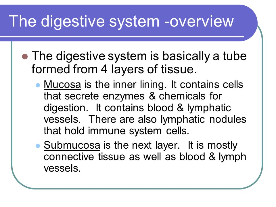The digestive system -overview Muscularis layer contains muscle tissue that is involuntary (not under your control).