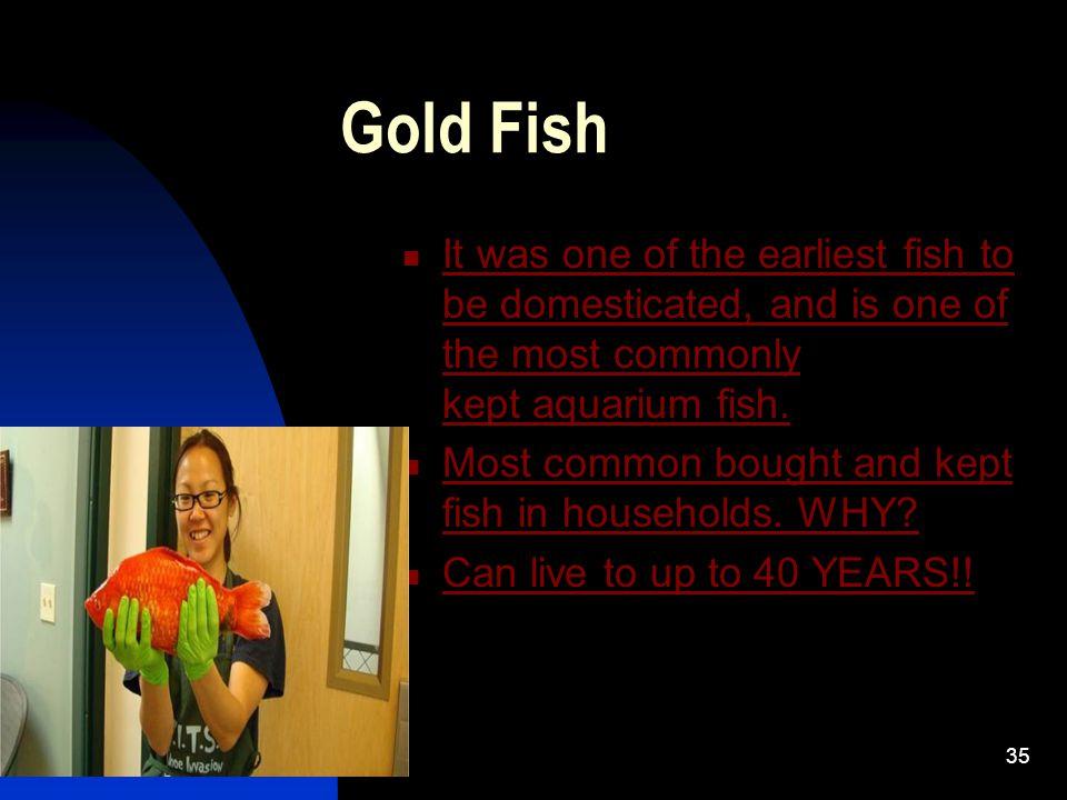 ..MORE BETA FISH http://www.youtube.com/w atch v=saiCxypusbA 34 http://www.youtube.com/watch v= Rds3dxalsi4