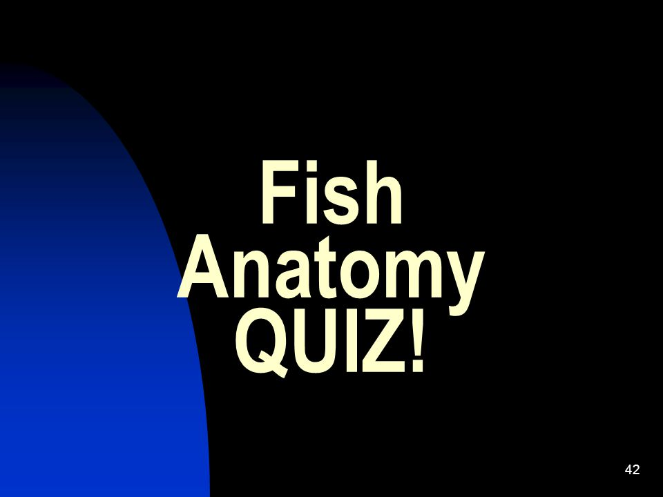 What have you learned? 1. What is the function of the dorsal fin? 2. What is the difference between an inferior and superior mouth of a fish? 3. Where