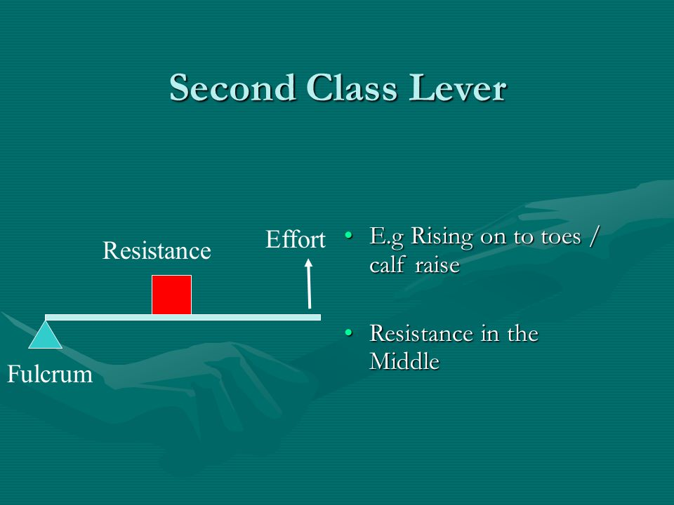 Second Class Lever E.g Rising on to toes / calf raiseE.g Rising on to toes / calf raise Resistance in the MiddleResistance in the Middle Resistance Fu
