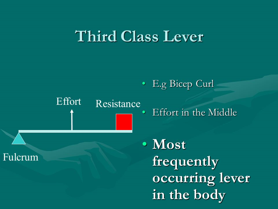Third Class Lever E.g Bicep CurlE.g Bicep Curl Effort in the MiddleEffort in the Middle Most frequently occurring lever in the bodyMost frequently occ