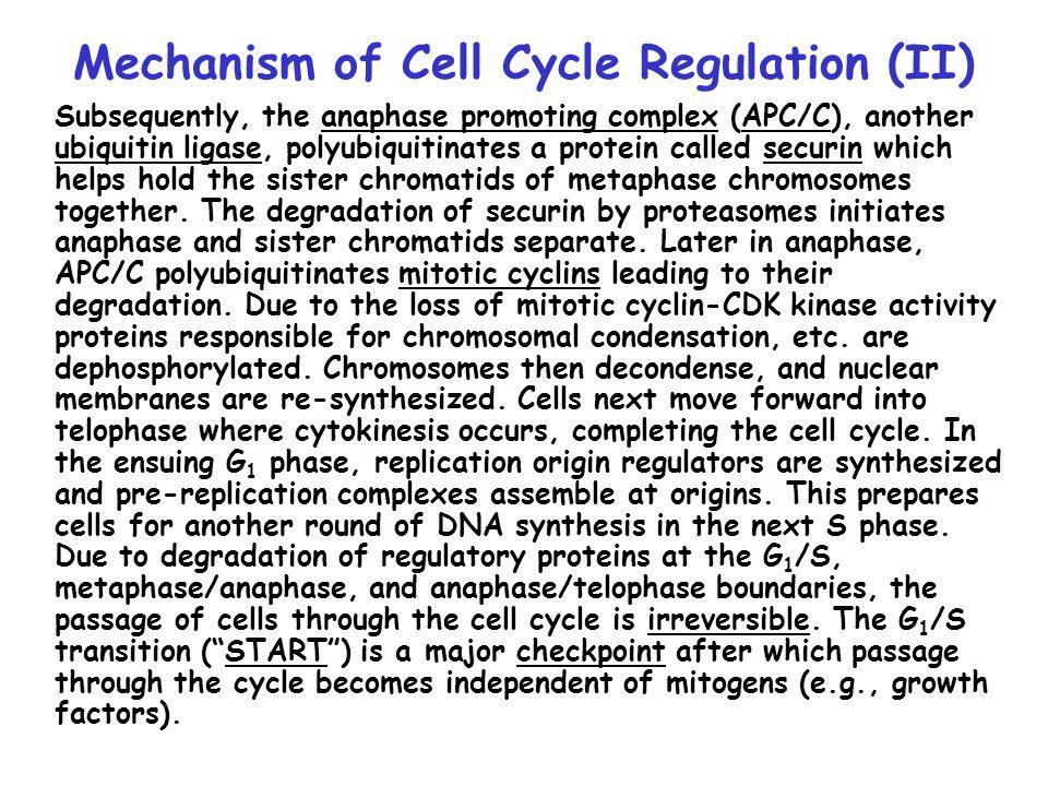 Mechanism of Cell Cycle Regulation (III)