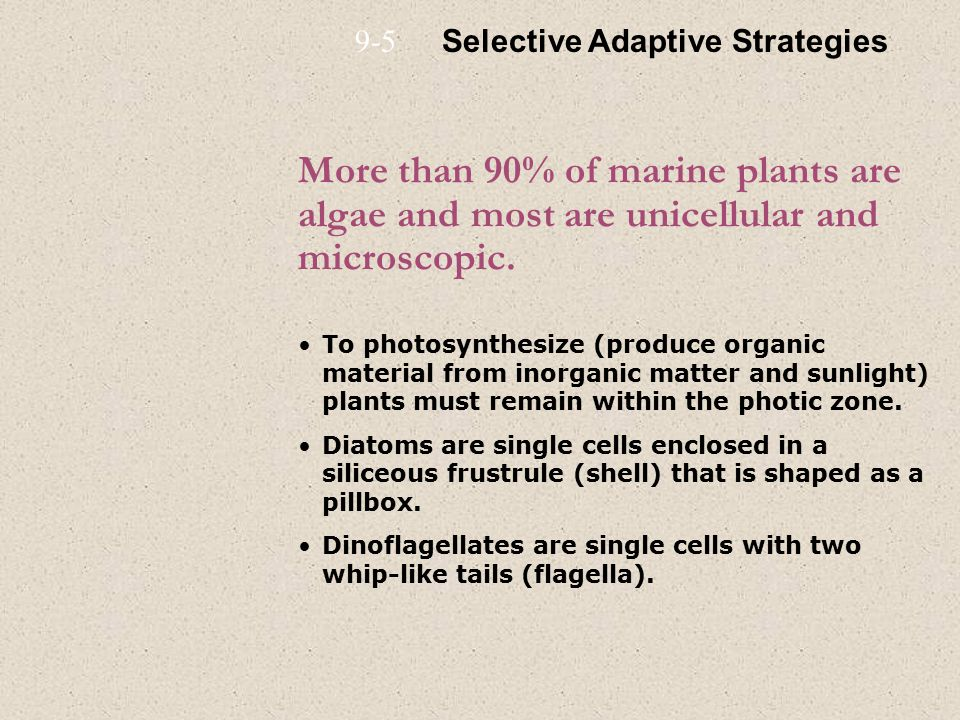 More than 90% of marine plants are algae and most are unicellular and microscopic.
