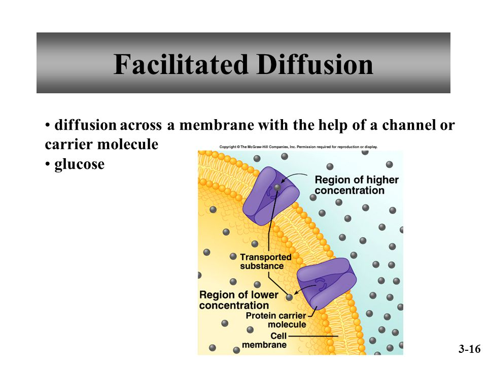Facilitated Diffusion diffusion across a membrane with the help of a channel or carrier molecule glucose 3-16